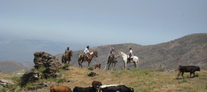 Horse Trek in Sierra Nevada: Guejar Sierra – Jerez del Marquesado – Berchules – Trevelez – Refugio del Poqueira – Guejar Sierra