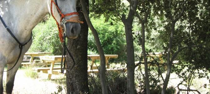 Romantic Horse Trek: Guejar Sierra