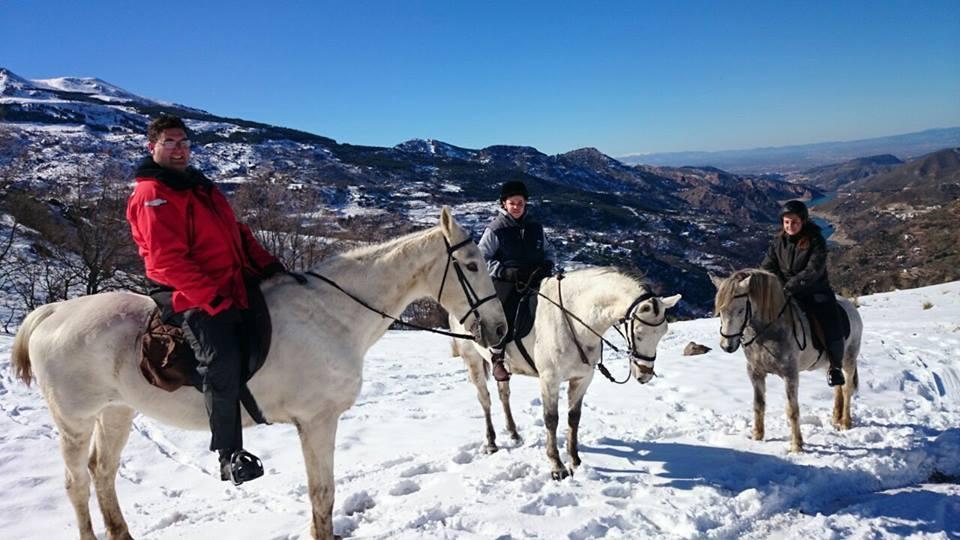 horses sierra nevada