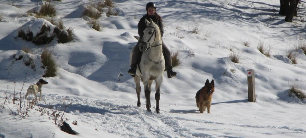 Horses Sierra Nevada (winter)
