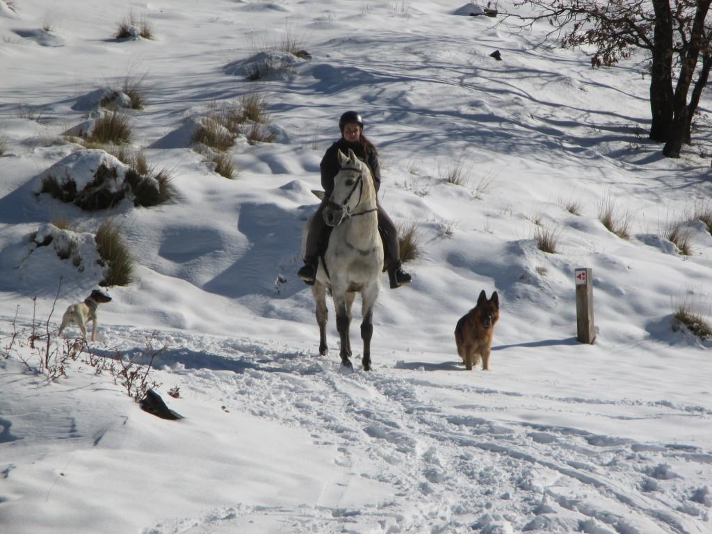 horse sierra nevada