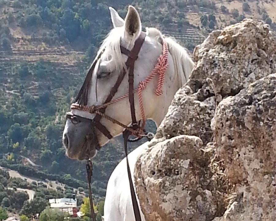 spain horse riding